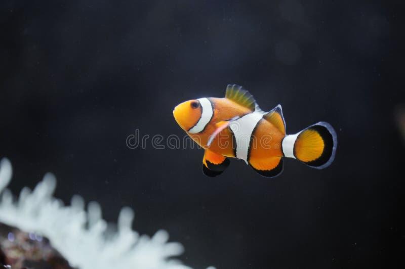 Nemo royalty-vrije stock foto's