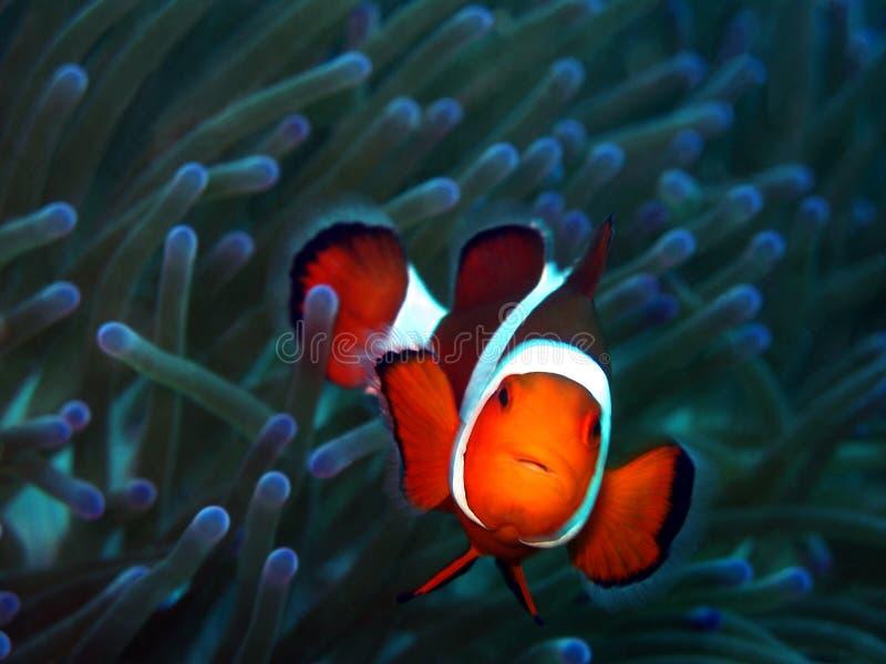 Nemo immagini stock libere da diritti