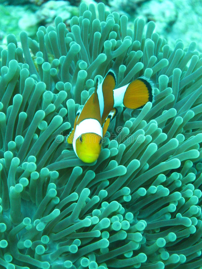 Nemo stockbild