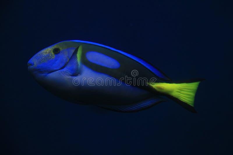 Nemo fisk i den stora akvariumiwakien fotografering för bildbyråer
