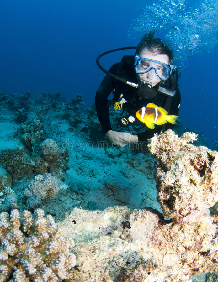 Nemo and scuba diver royalty free stock image