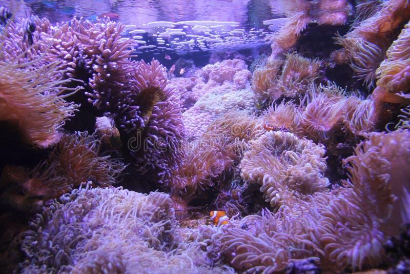 Nemo, vond stock afbeelding