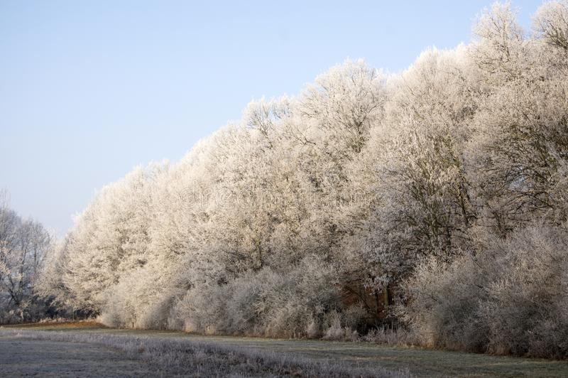 Nemosicka stran, hornbeam forest - interesting magic nature place in winter temperatures, frozen tree branches stock photography