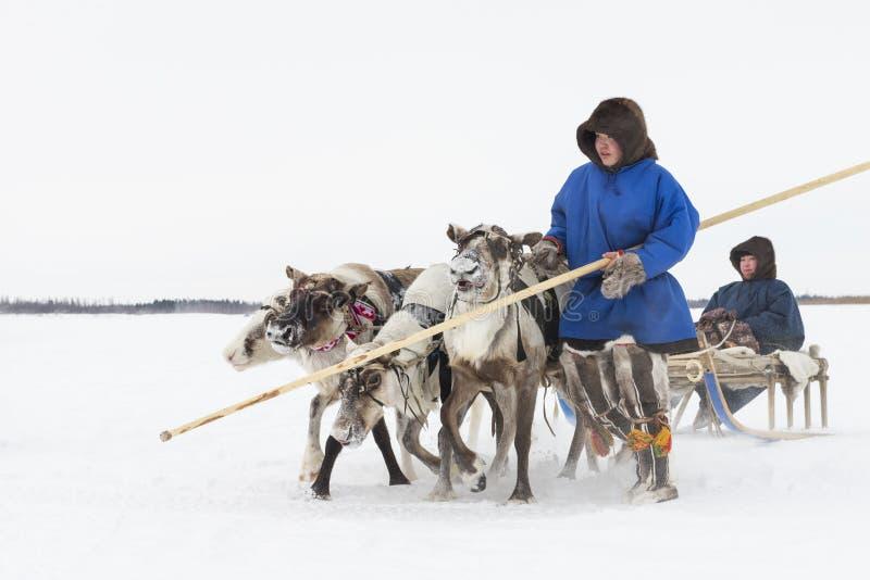 Nenets τάρανδος Herders στη χερσόνησο Yamal, tarko-πώληση ημέρας του εθνικού φεστιβάλ «, στις 28 Μαρτίου 2015 στοκ εικόνες