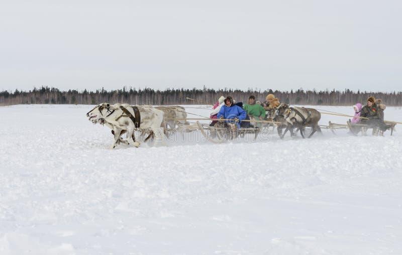 """Nenets pastores na península de Yamal, Tarko-venda da rena dia no festival nacional do """", o 28 de março de 2015 foto de stock"""