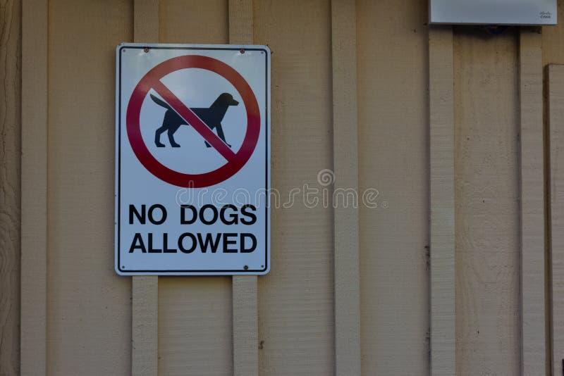 Nenhum cão permitiu o sinal e o símbolo na parede de madeira foto de stock royalty free
