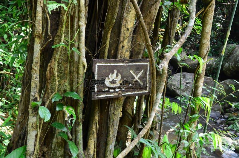 Nenhum sinal do fogo na placa de madeira na floresta imagem de stock