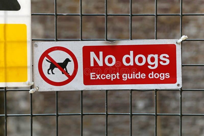 Nenhuns cães fotos de stock royalty free