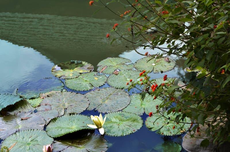 Nenuphar und rote Blumen lizenzfreie stockfotos