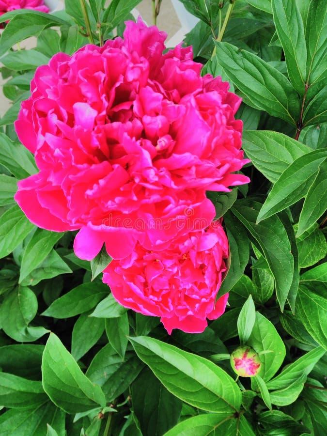 Neon botanische schoonheid royalty-vrije stock foto