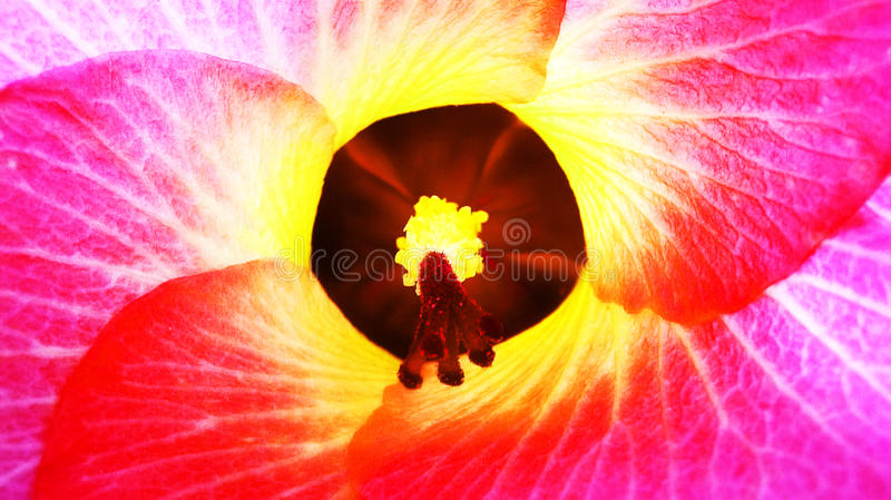 Neon flowers royalty free stock image