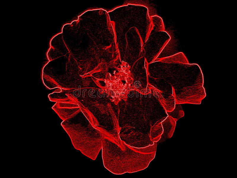 Neon rose stock photography
