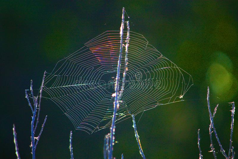 Neon Spiderweb. Spiderweb in the morning sun shows neon-like colors and luminance stock images