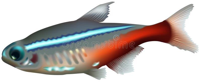 Neon Tetra vector illustratie