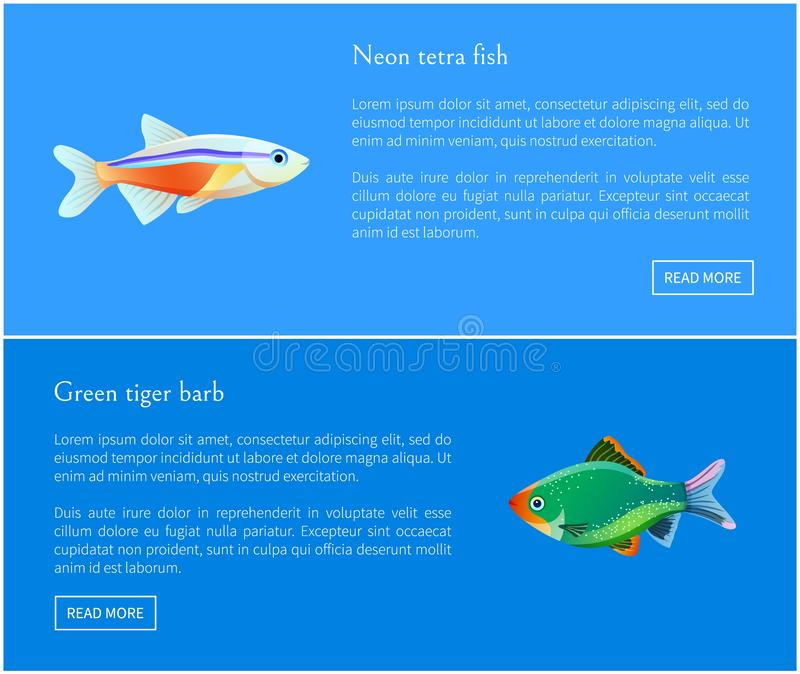 Neon Tetra Green Tiger Barb Vector Illustration. Neon tetra and green tiger barb fish types. Posters set with info about exotic species. Colorful unique fauna of vector illustration