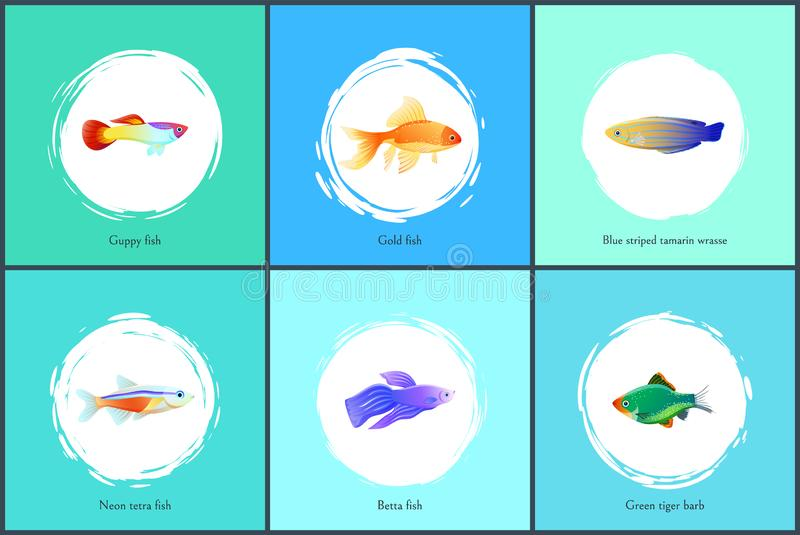 Neon Tetra Fish Blue Tamarin Vector Illustration vector illustration