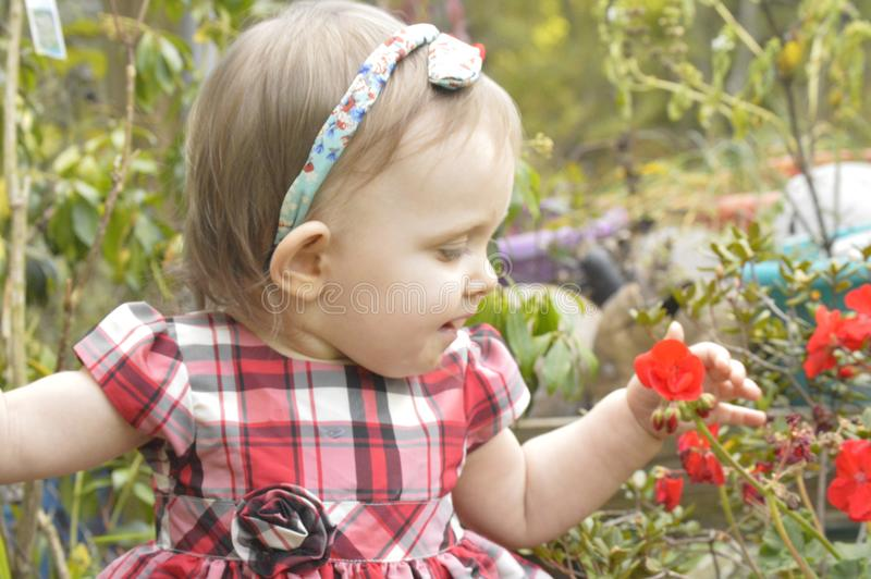Neonata che esamina un fiore fotografia stock