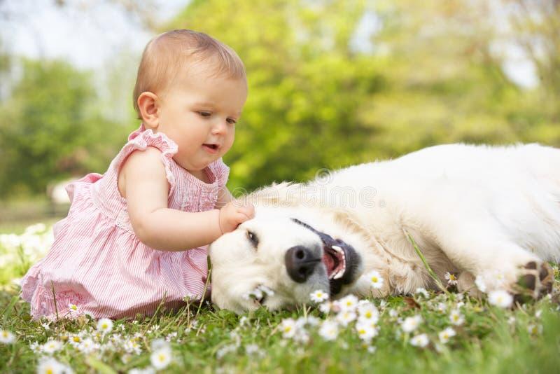 Neonata che si siede nel campo che Petting il cane della famiglia fotografie stock libere da diritti