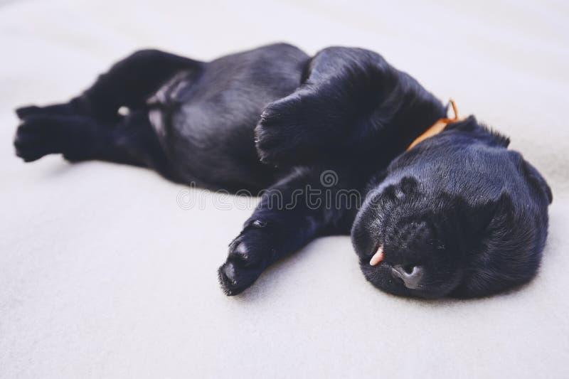 Neonato del cane immagine stock
