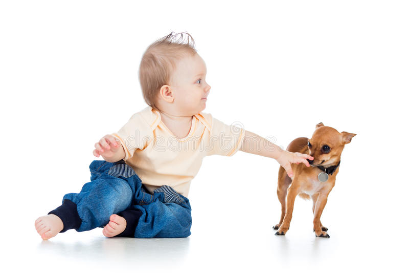 Neonato e cane divertenti su fondo bianco fotografia stock
