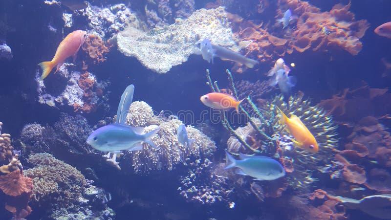 Neonfische lizenzfreie stockfotos