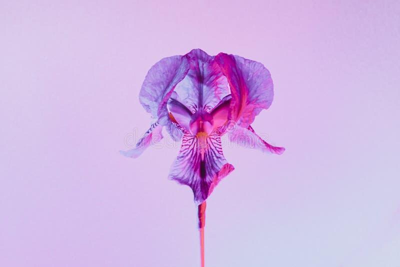 Neonowy barwiony kwiat obrazy stock