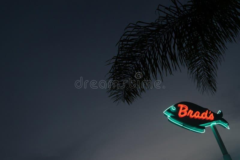 Neonowy znak Z drzewkiem palmowym obrazy stock