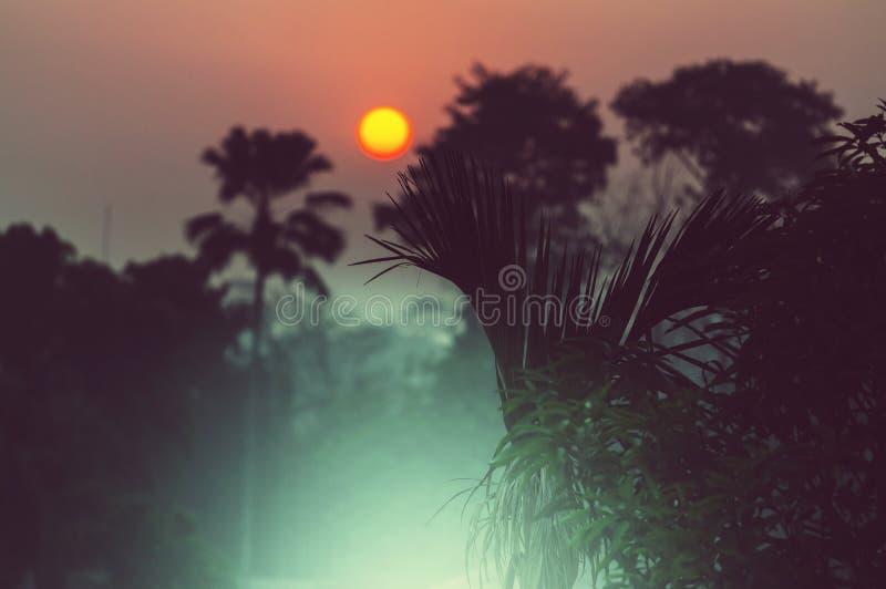Nepal djungel arkivbild