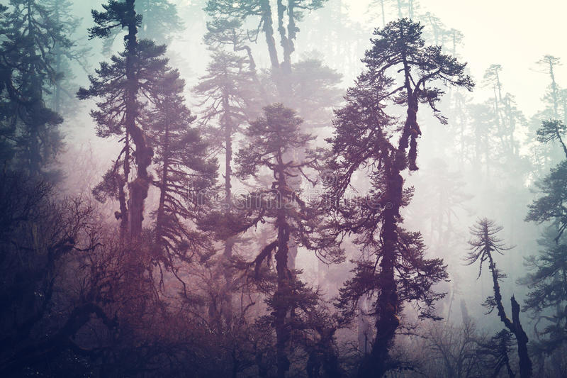 Nepal djungel arkivbilder