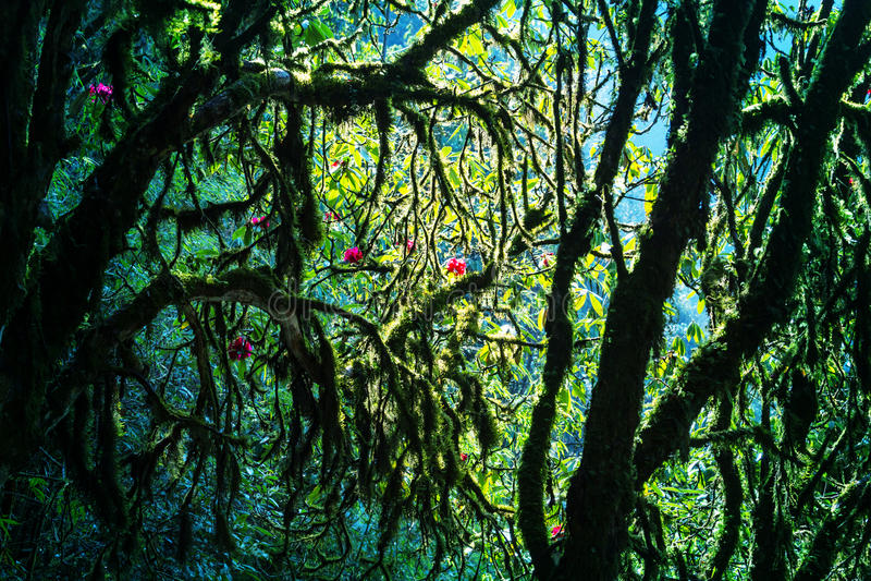 Nepal djungel arkivfoton