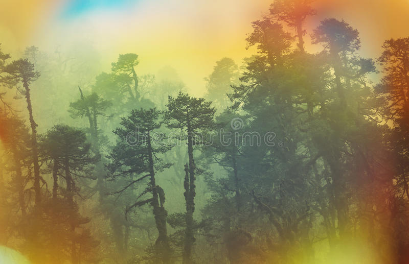 Nepal djungel royaltyfri foto