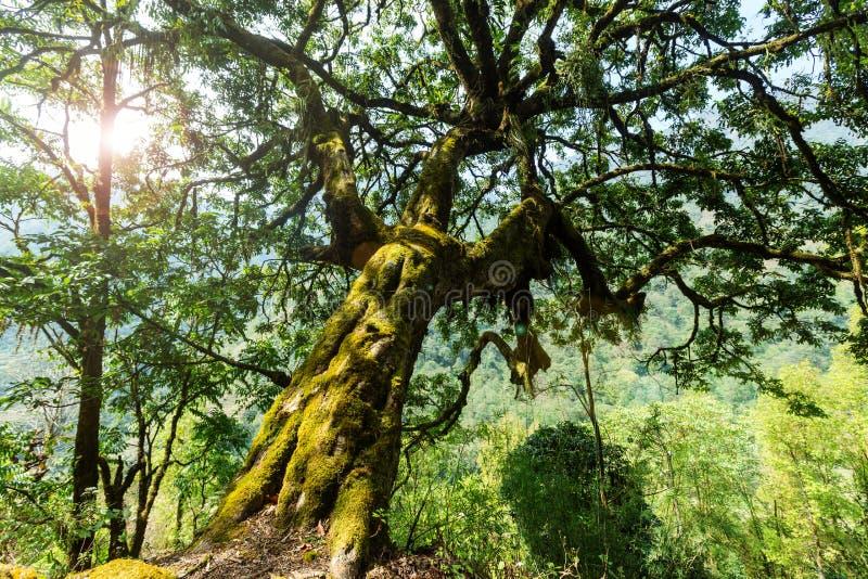 Nepal djungel royaltyfria bilder