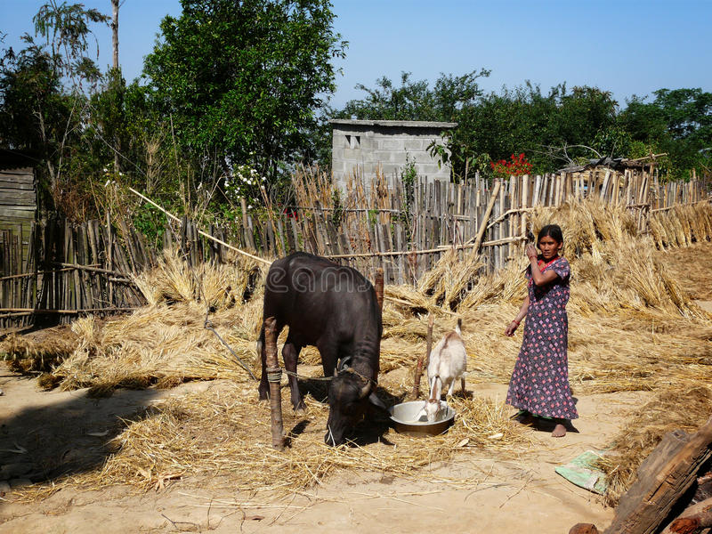 Nepal farm life royalty free stock images