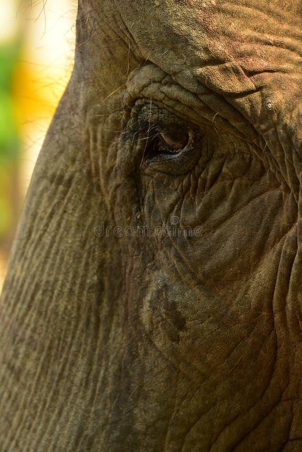Nepal, het Nationale Park van Chitwan, het centrum voor olifanten stock afbeelding