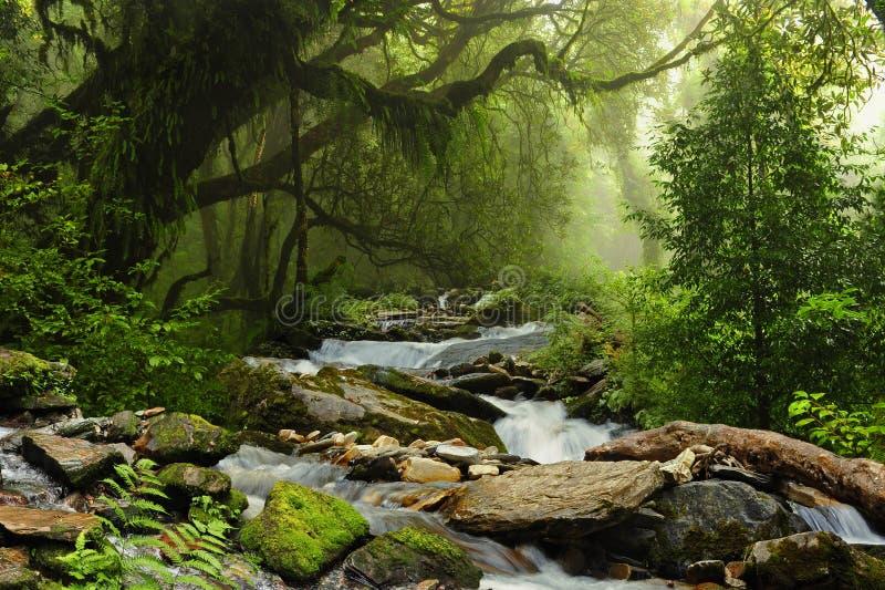 Nepal jungle. Subtropical jungle around Annapurna Nepal royalty free stock photography