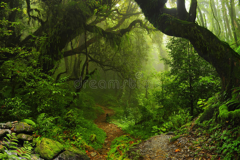Nepal jungle stock images