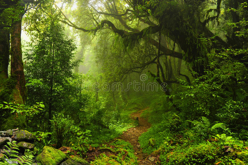 Nepal jungle stock photos