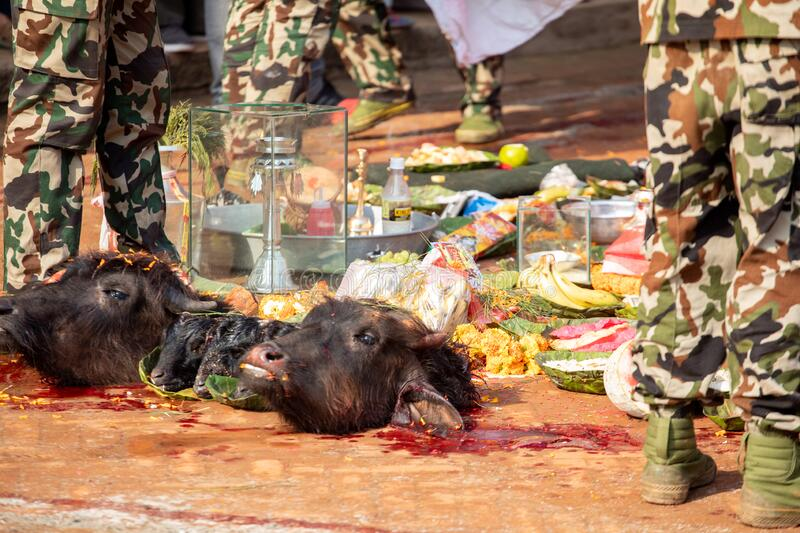 Nepal, Kathmandu, April 4, 2017. The sacrifice ceremony in honor of the goddess in Nepal.  royalty free stock images