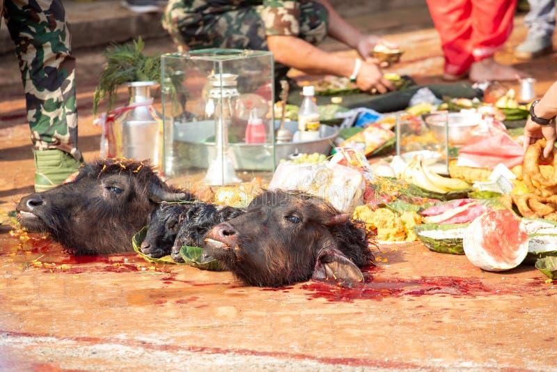 Nepal, Kathmandu, April 4, 2017. The sacrifice ceremony in honor of the goddess in Nepal.  stock photos