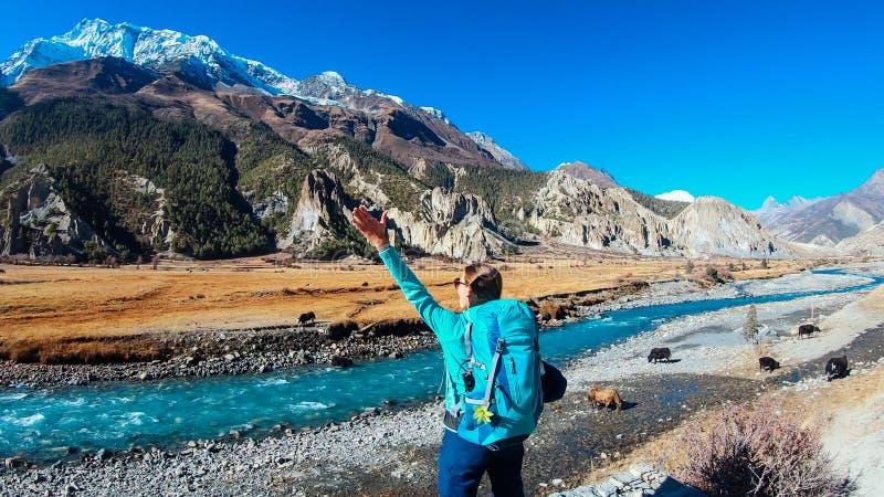 Nepal - Manang, Mädchen und die Yak lizenzfreie stockbilder