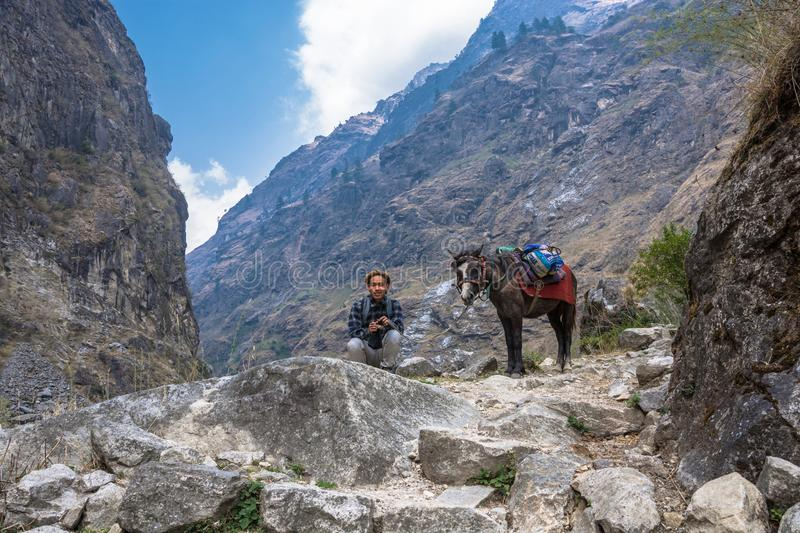 A young Nepalese squatting next to a donkey on March 29, 2018, N royalty free stock photography