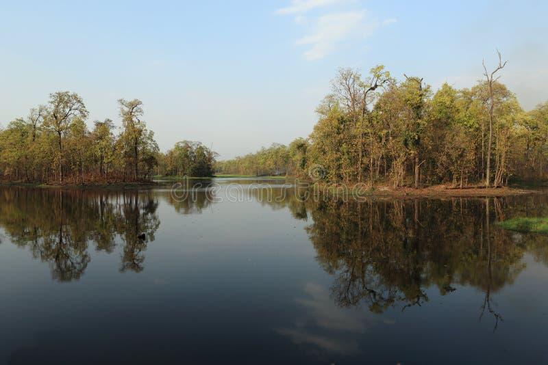 Nepal Nationalpark Chitwan fotos de stock royalty free