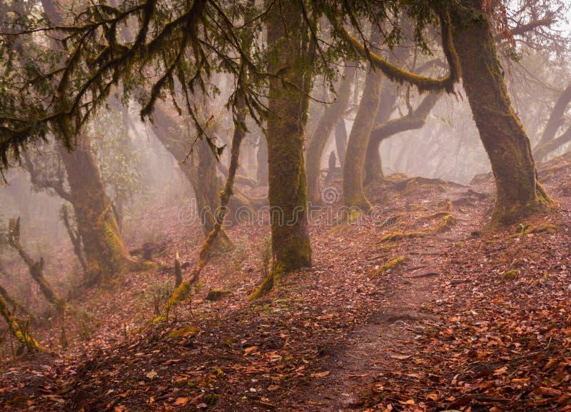 Nepal tropisk djungel med dimma arkivfoton