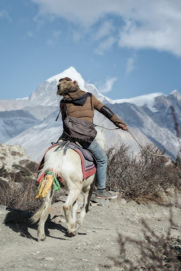 Nepalees personenvervoer snel op een klein paard op de sleep van Manang aan Thorong-de Pas van La stock foto