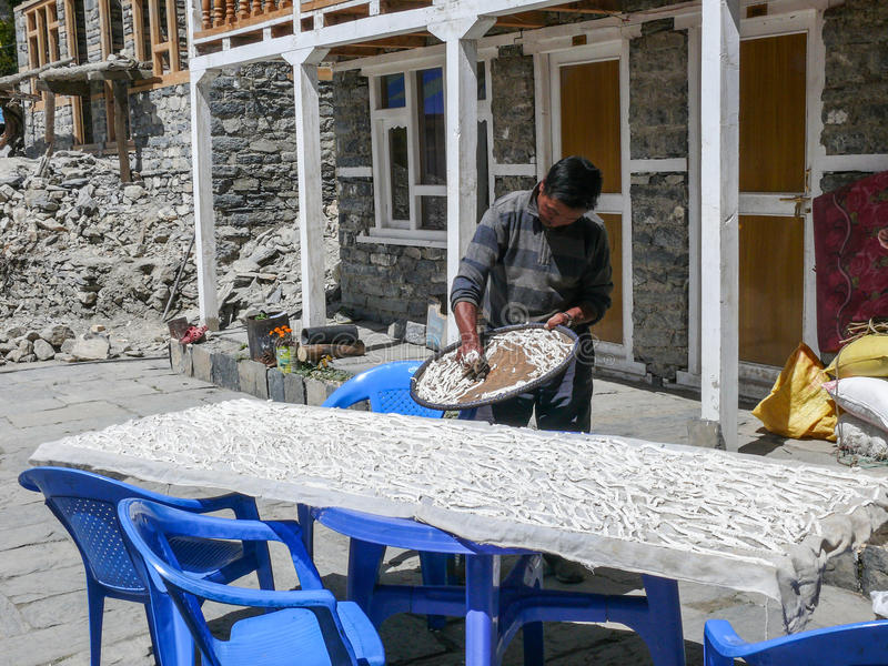 Nepalese Drying Yak Cheese, Nepal royalty free stock images