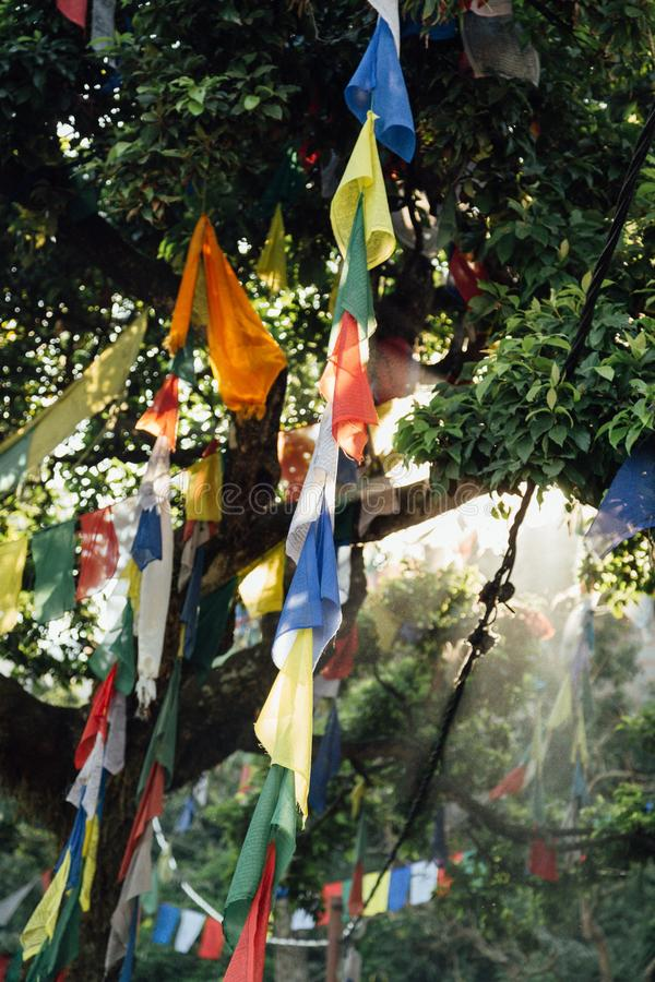 Flags hanging from trees in Nepal royalty free stock images