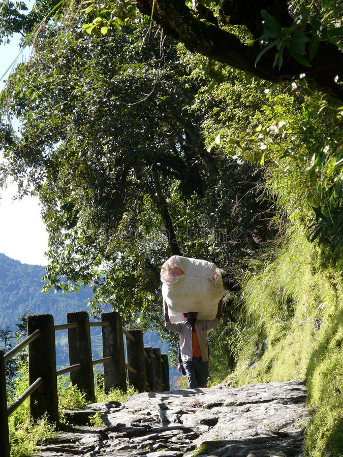 Nepalese man carrying a big bag in Annapurnas. stock photos