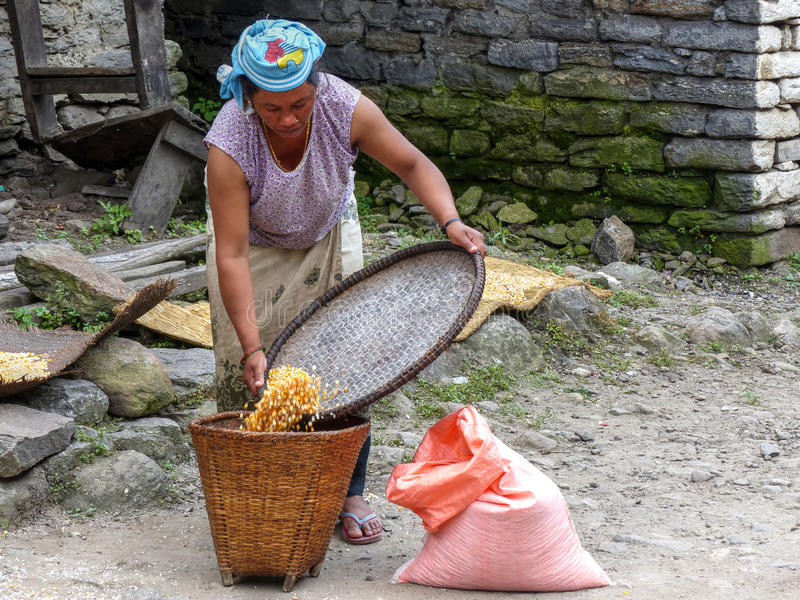 Nepalese woman drying corn. Meeting local people on Annapurna Circuit trek