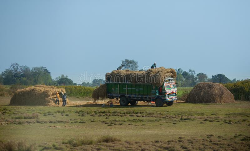 Nepalese workers loads haystacks on truck. royalty free stock photography