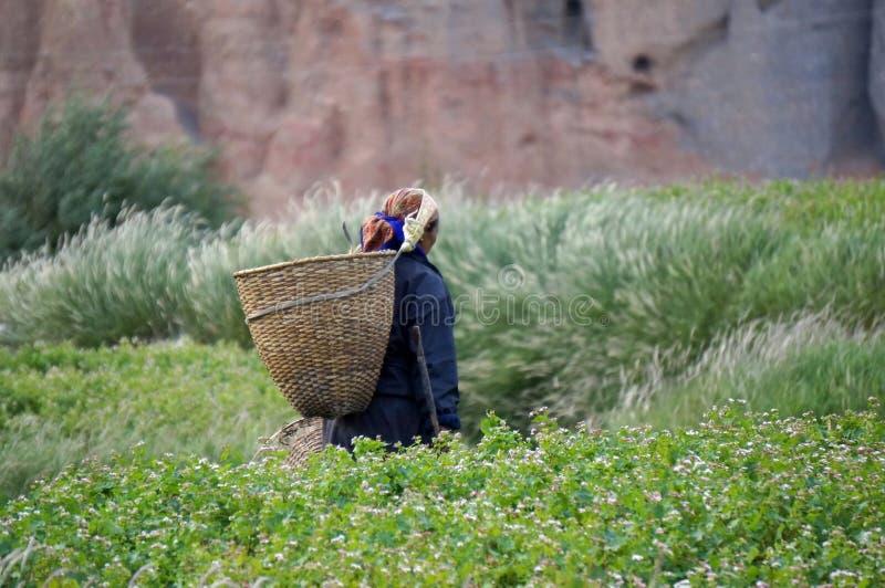 Nepalska kobieta iść zbierać warzywa w ogródzie z koszem za jego, z powrotem, w wiosce Chusang obrazy stock
